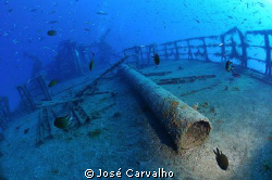 &quot;Madeirense&quot; wreck, Porto Santo Island, Protugal - Deck p... by Jos&#233; Carvalho 